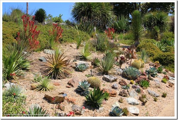 160813_UCSC_Arboretum_223