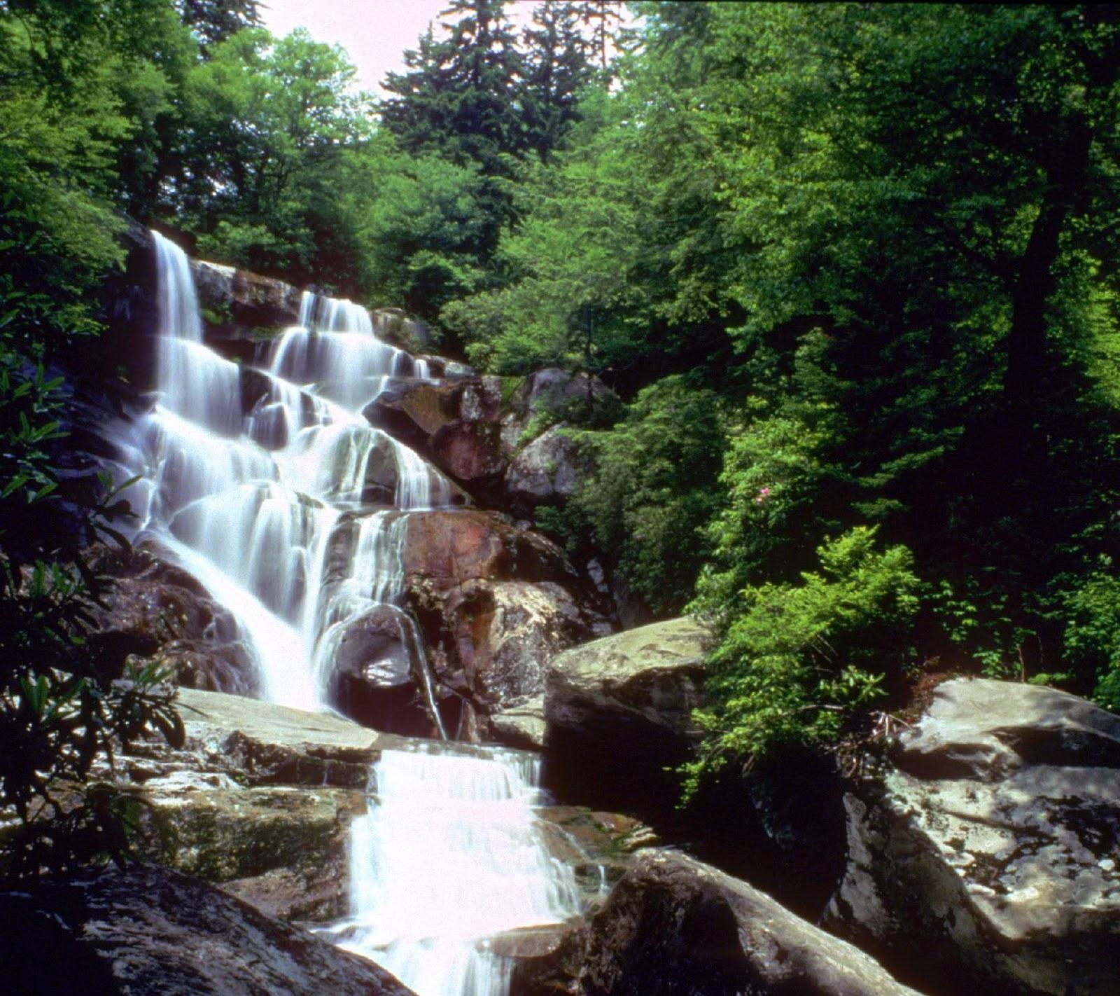 Gatlinburg Cabin Rentals Great Smoky Mountains Trail