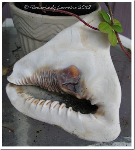 04-19-seashell2