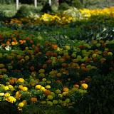 10-26-14 Dallas Arboretum - _IGP4267.jpg