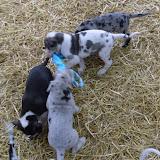 Thelma & Garths 3/21/12 litter - SAM_3321.JPG