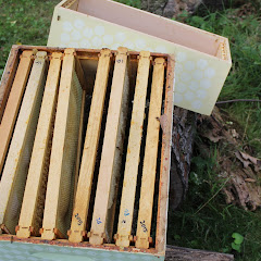 PLC Honey Fiesta 7/10/16 - IMG_3671.JPG