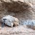 Fóssil de dinossauro é encontrado no interior de SP