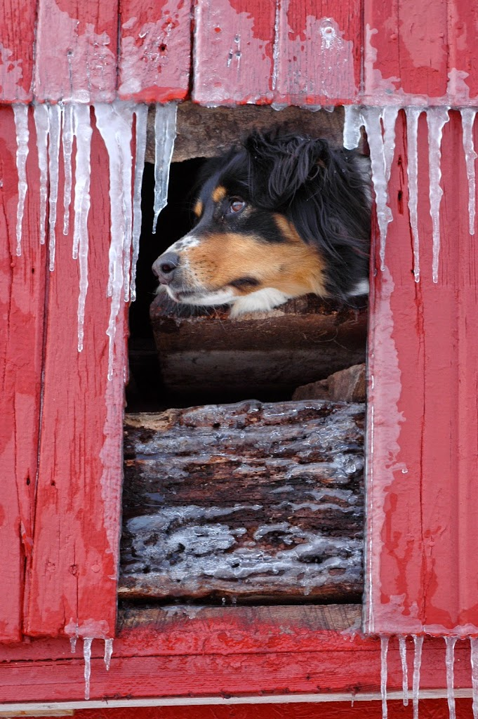 """""""Hanging Out in the Barn"""" by Sheldon Thompson -- 2nd place B Special"""