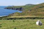 Les falaises du Kerry plongent dans l'Atlantique