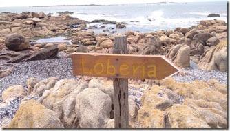 cabo-polonio-loberia