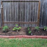 Gardening 2011 - 100_7075.JPG