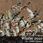 Winter 2010 Danube Delta
