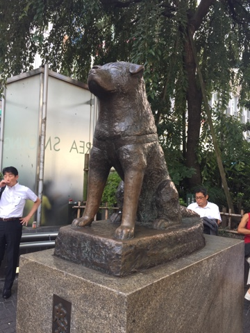 The Hachiko statue is the famous meeting spot outside Shibuya Station, If you are looking for the famous Shibuya crossing, take the Hachiko exit from the station