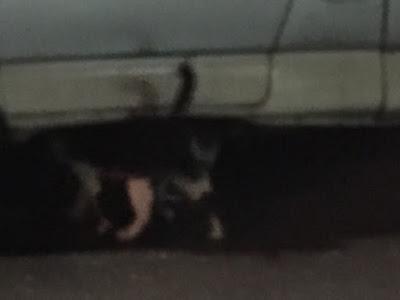 健康路の猫兄弟