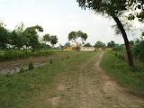 Farmers' fields at Amarpurkashi