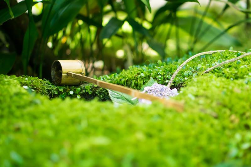 臥龍山荘 庭園 1