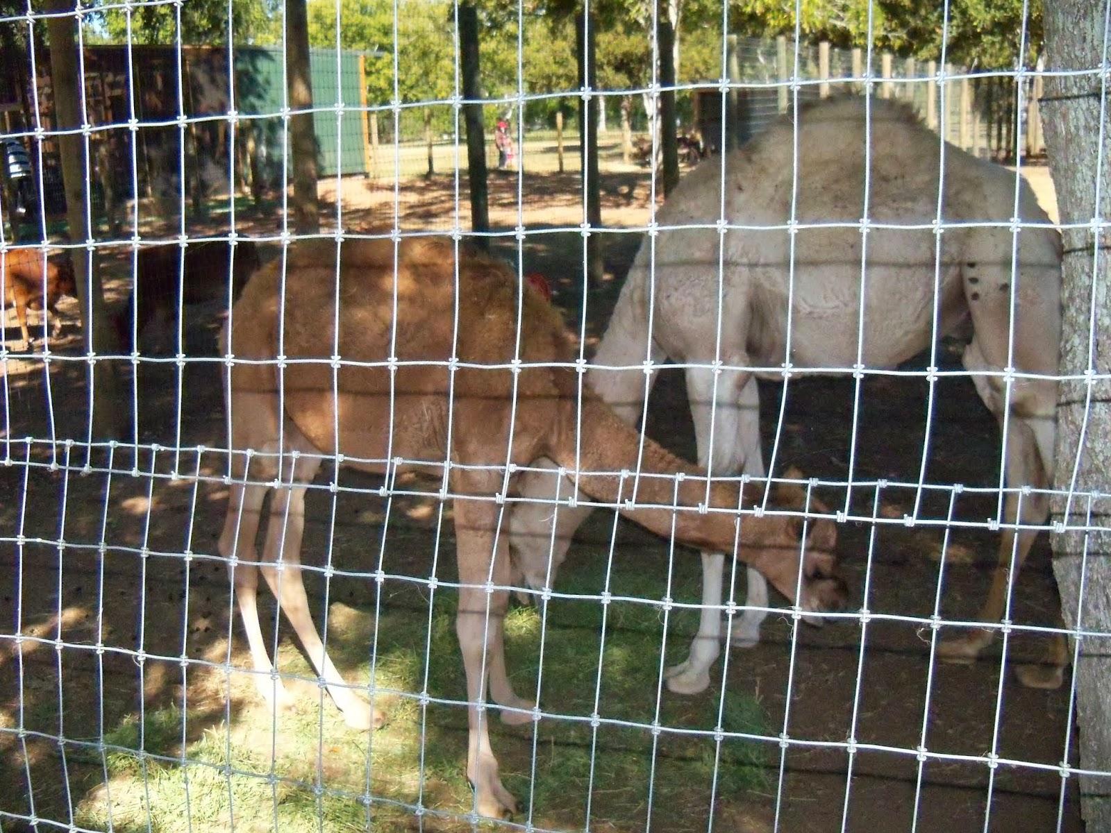 Blessington Farms - 116_4986.JPG
