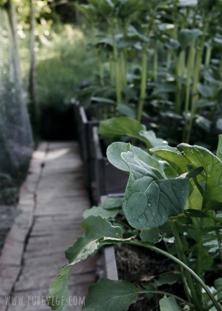 [Garden-5%255B2%255D.jpg]