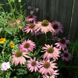 Gardening 2010, Part Three - 101_5094.JPG