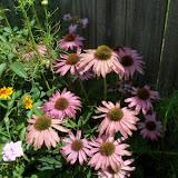 Gardening 2010, Part Three - 101_5094.JPG
