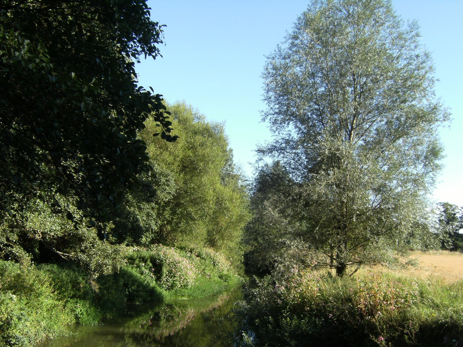 DSCF9324 River Medway at Ashurst