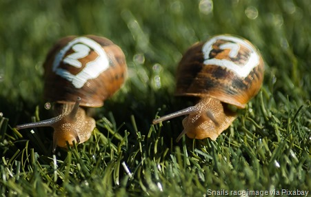 snails-competitors-race