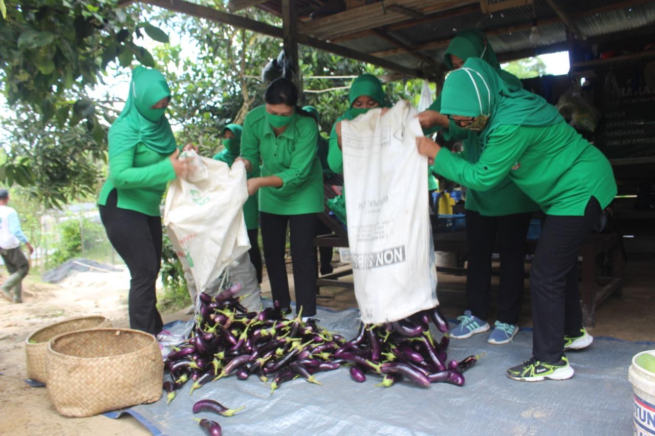 Jelang HUT TNI ke 75, Persit KCK Cab LXV Dim 0913 PPU Panen Sayur