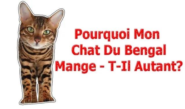 Pourquoi Mon Chat Du Bengal Mange - T-Il Autant?
