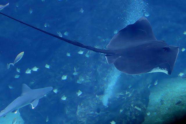 桃園 青埔 親子景點  Xpark 水族館 企鵝 水母 水豚君