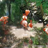 04-07-12 Homosassa Springs State Park - IMGP0051.JPG