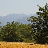 Biotope de Brintesia circe, Melanargia lachesis. Vue vers les Albères, 26 juin 2010. Photo : J.-M. Gayman