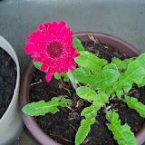 Gardening 2011 - 100_6761.JPG