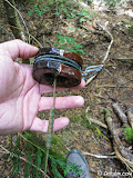 Back near the location of the hydro-plant, we locate a two piece ceramic insulator and wire heading off through the forest.