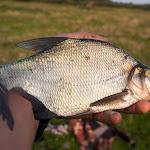20140823_Fishing_Lysyn_016.jpg