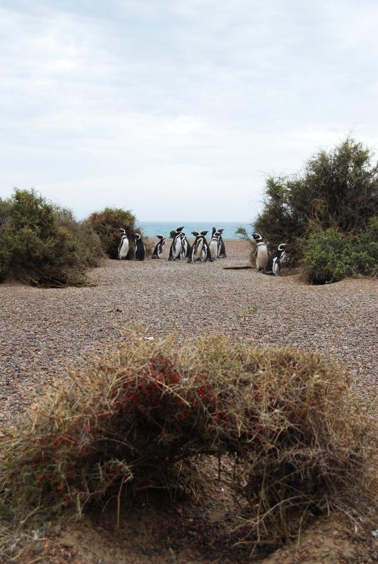 Biologistes_et_pingouins_12