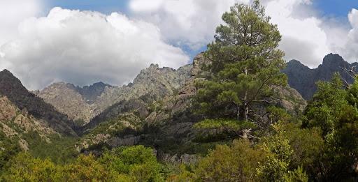 La Cavichja vers l'amont et le Monte Saltare caché derrière le pin