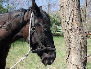 Photo: Naaa, hagyjál már pihenni egy lovat