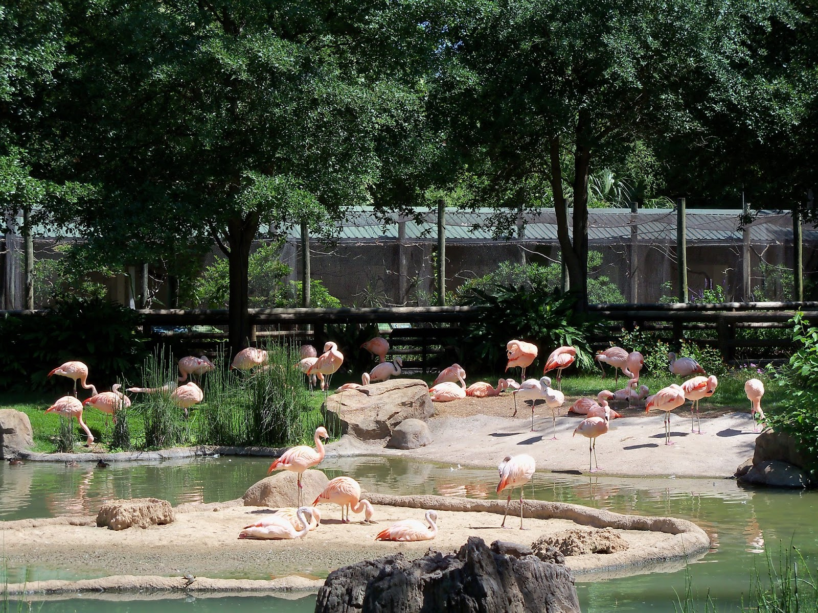 Houston Zoo - 116_8449.JPG