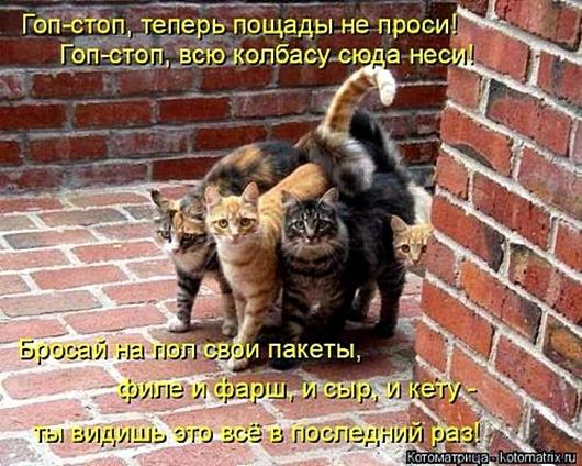 1495826315_kotomatricy-5