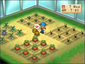 Seperti yang kita ketahui seri Harvest Moon sangatlah banyak Perbedaan Jack, Pete, dan Mark di Harvest Moon