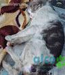 Gatito esterilizado. Ya no preñará a más gatitas )
