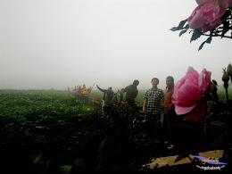 dieng plateau 5-7 des 2014 pentax 58