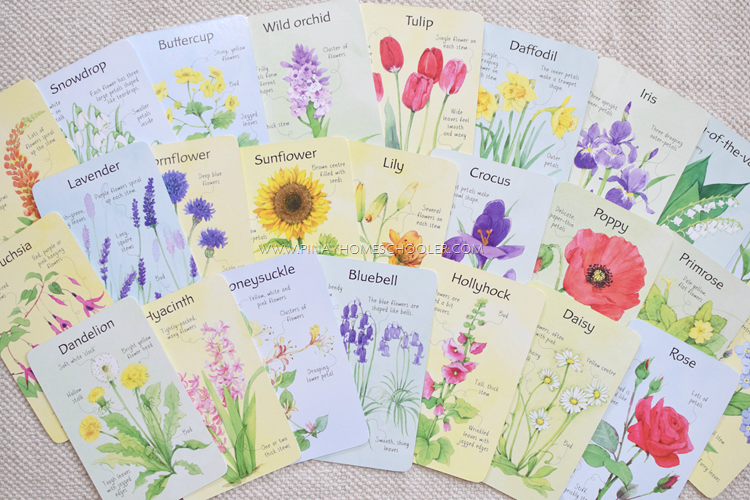Usborne Flowers (Spotter's Cards)