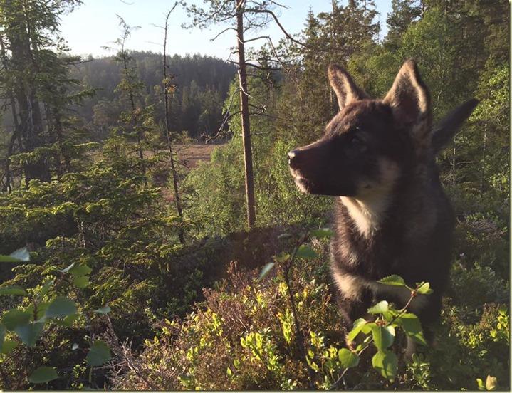 160602 Heikki i skogen