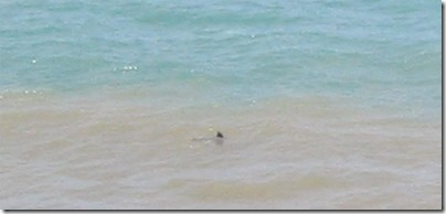 barbatana-de-golfinho-em-pirangi