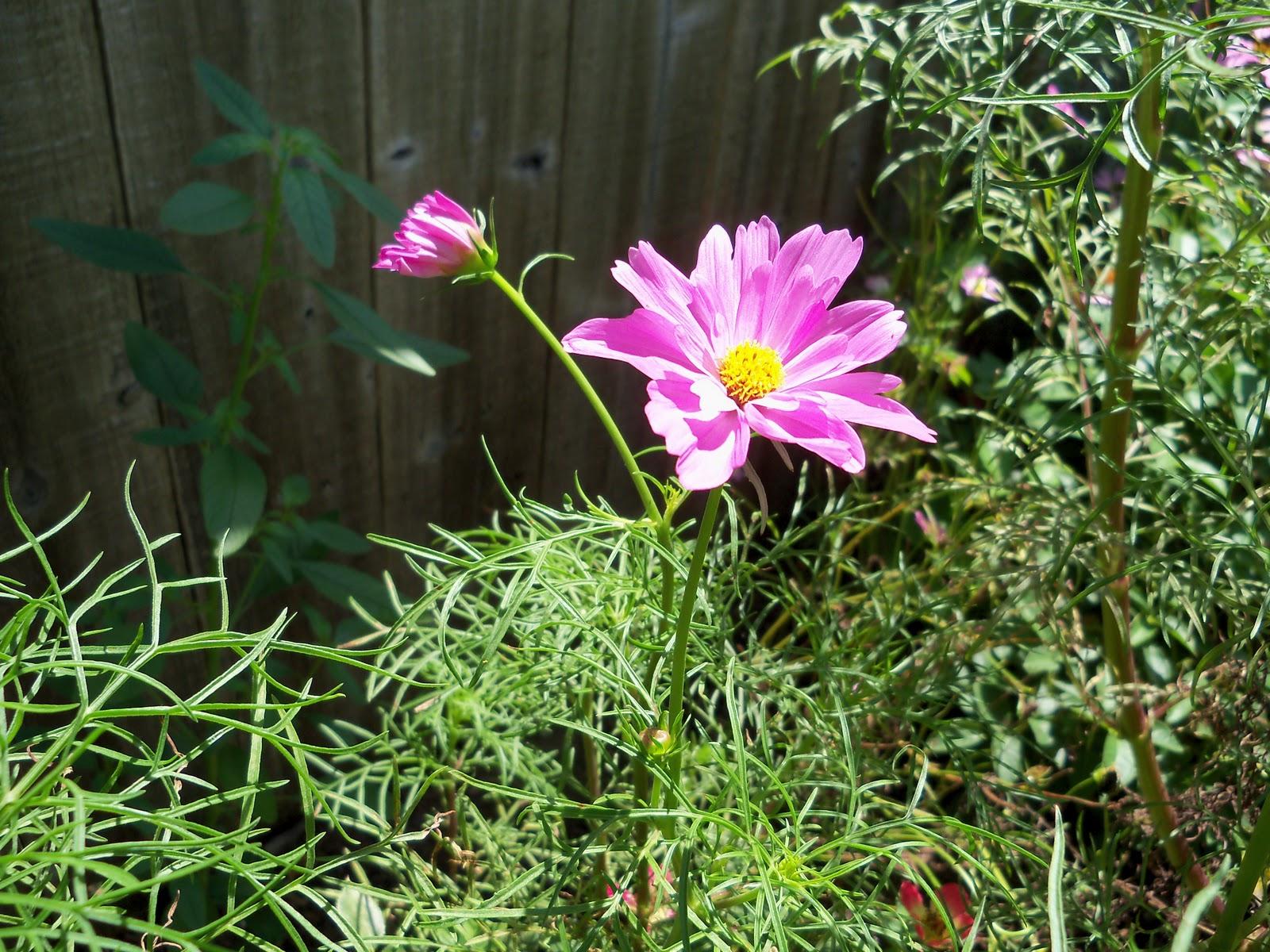 Gardening 2010, Part Three - 101_4371.JPG