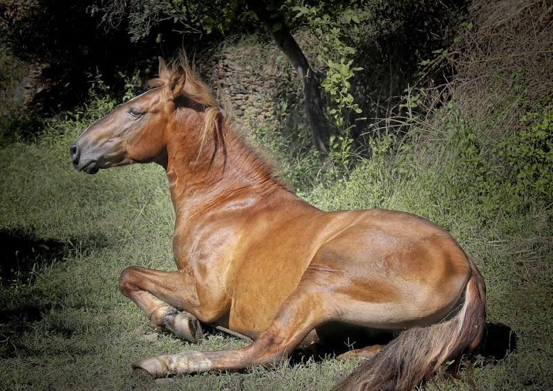 Maria Arenas - Cavall