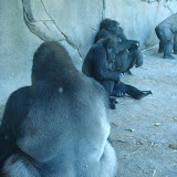 Pittsburgh Zoo Revisited - DSC05187.JPG