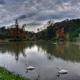 Villa Pamphili by Juan Tomas Alvarez Minobis - City,  Street & Park  City Parks ( nature, autumn, clouds, lake, swans )