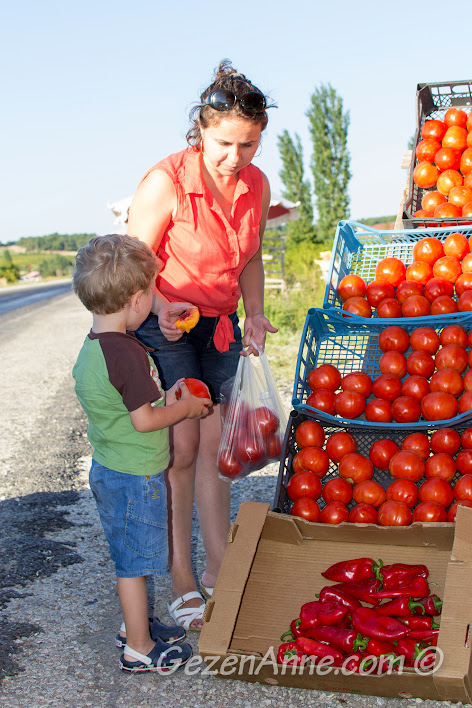 Çanakkale'de yol üzerinde domates seçerken