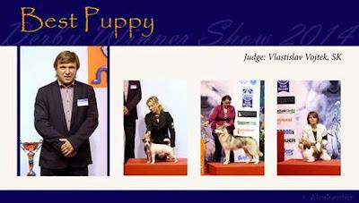BIS 3 puppy Nitra SK