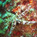 Etoile de mer épineuse (à 7 bras)