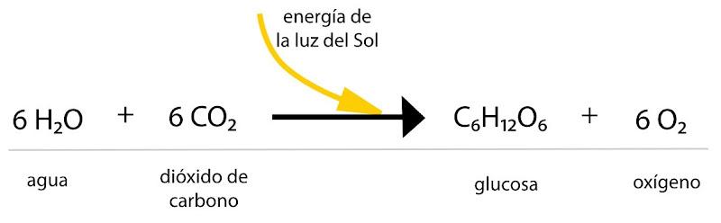 balance quimico fotosintesis