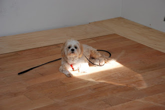 Photo: Ruby catches some rays on the new cherry kitchen floor.